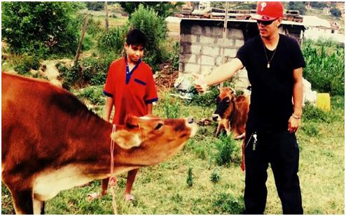 nepal-2cowshandedover